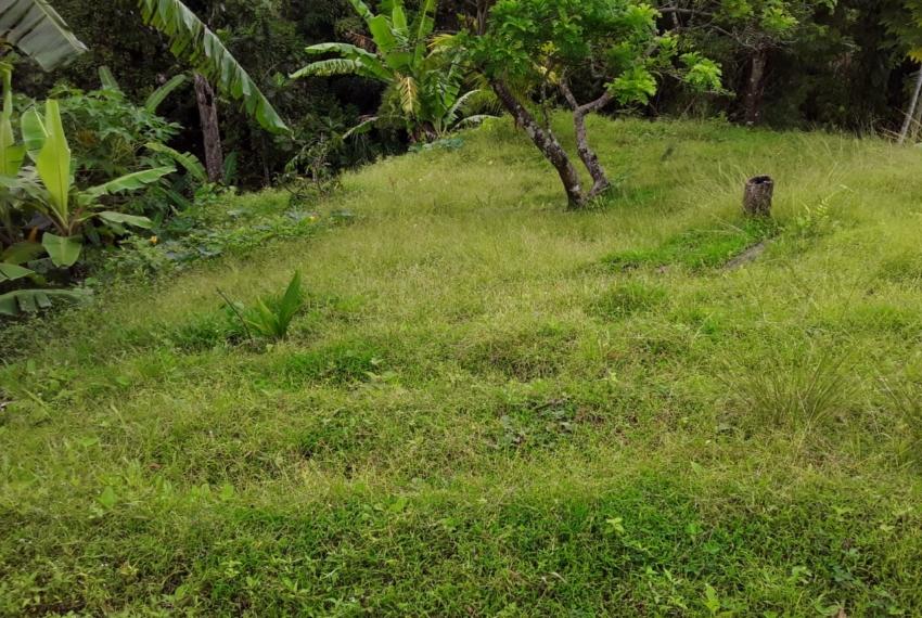 Land at Cane End - back lot 1